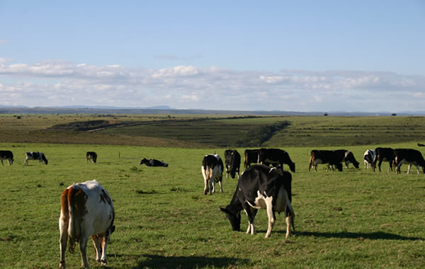 Dairy farming in the Eastern Cape