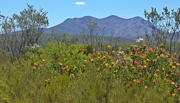 Baviaans Nature Reserve