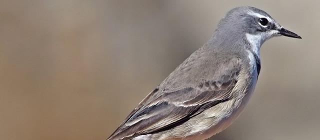 bird-640